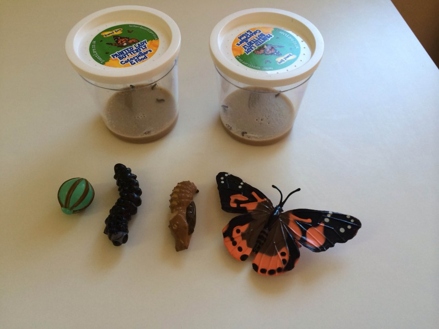 Our Caterpillar to Butterfly Blog!